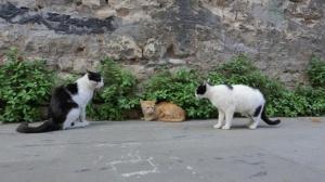 Город кошек