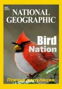 Птичья популяция
