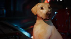 Собаки-Мстители