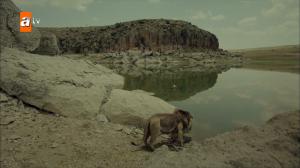 Степной лев Джелаладдин